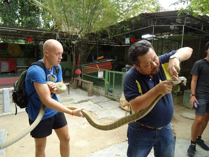 Helping a King Cobra shed its skin at Penang's Snake Farm